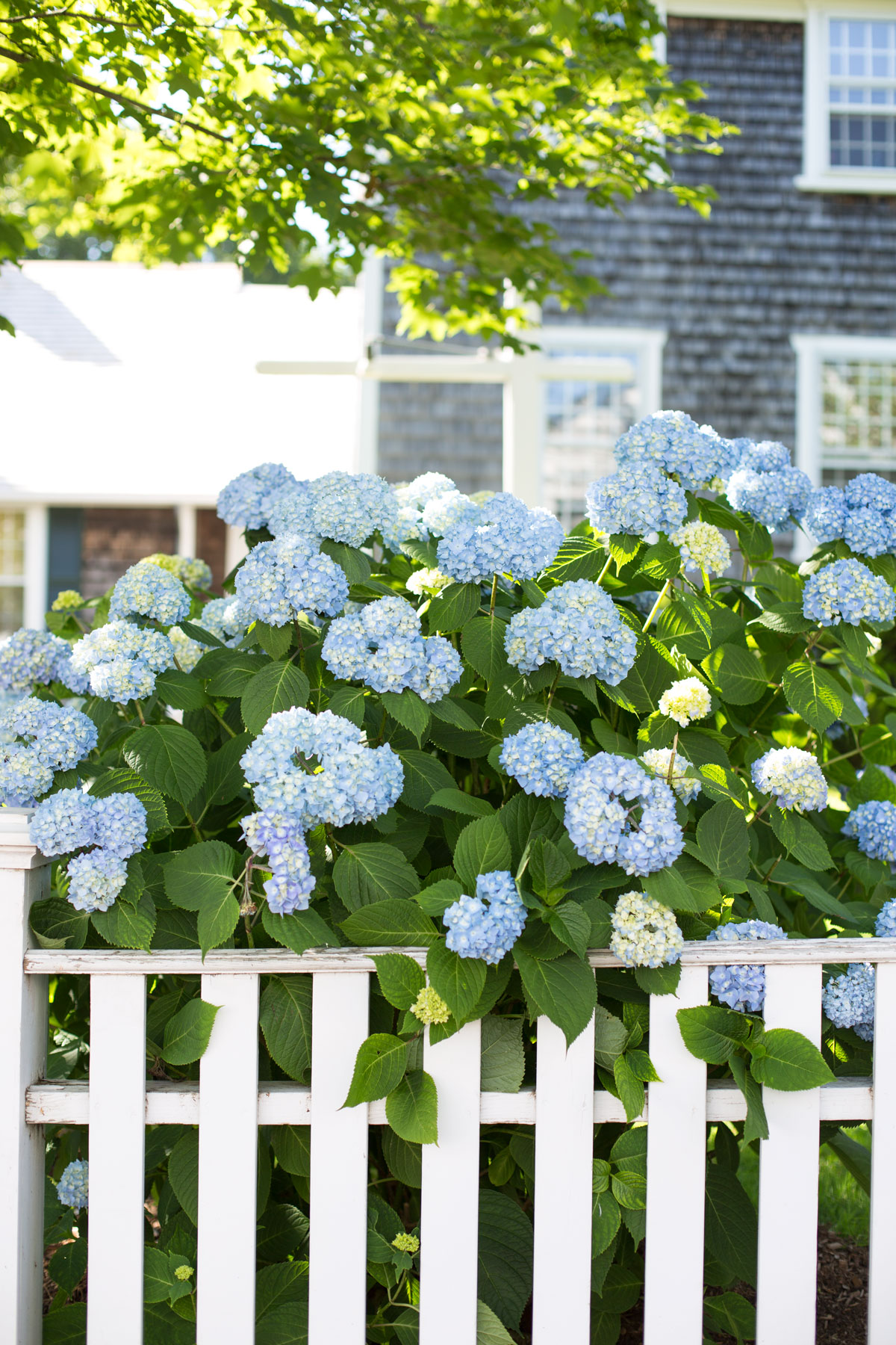 What to do in Edgartown Martha's Vineyard